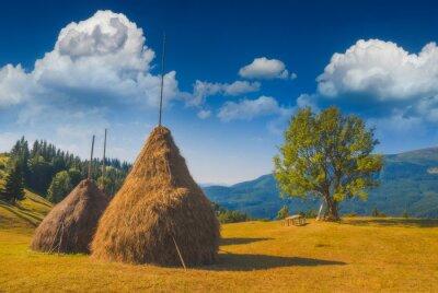 Haystacks in a Carpathian summer valley