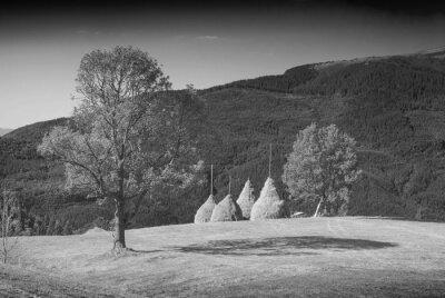 Haystacks in a Carpathian valley. Monochrome