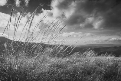 High grass on a wind. Monochrome