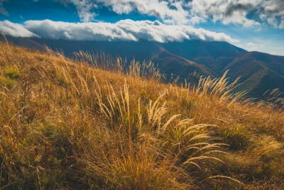 High yellow grass on a hill