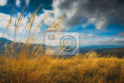 High yellow grass on a wind