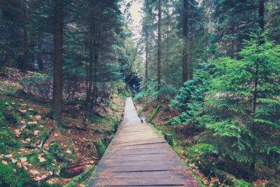 Sticker hiking path inside forest landscape
