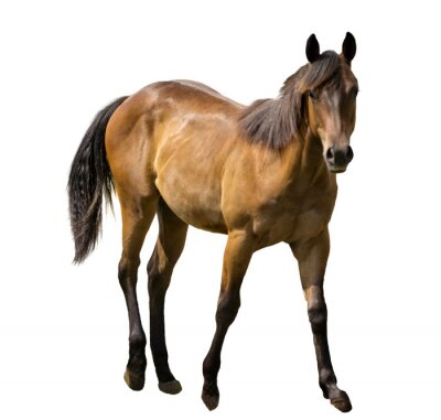 Sticker Horse Isolated