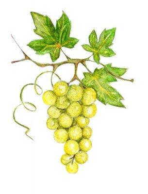 Sticker Illustration -- green grapes