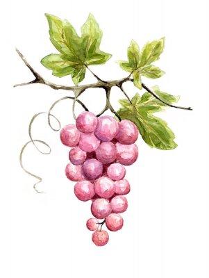 Sticker Illustration -- vine