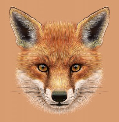 Sticker Illustrative Portrait of a Red Fox. The cute fluffy face of forest Fox.