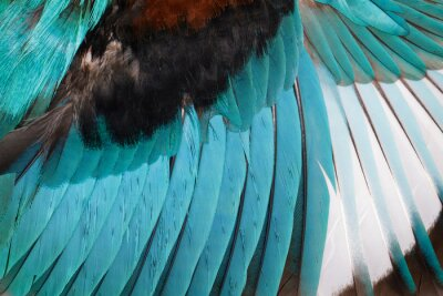 Sticker Image of white-throated kingfisher wings on a white background. Bird. Animal.