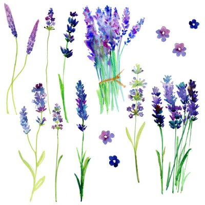 Sticker Isolated Provence lavender flowers. Watercolor floral set for your design.
