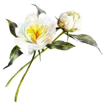Sticker Isolated watercolor bouquet of white peonies with leaves.