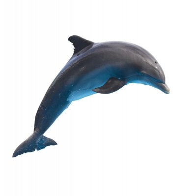 Sticker jumping dolphin on white