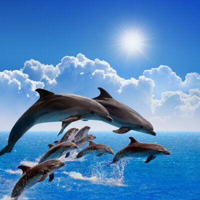 Sticker Jumping dolphins