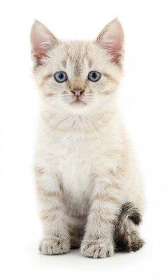 Sticker Kitten on a white background