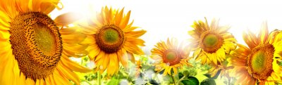 Sticker kwiaty