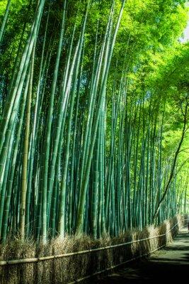 Sticker Kyoto Sagano of bamboo forest