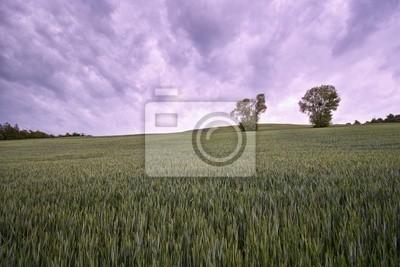 landscape blés