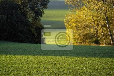 landscape of country