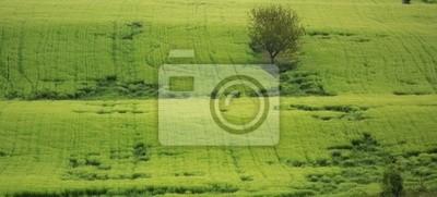 landscape of greenery