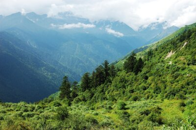 Sticker landscape of mountain forest and valley