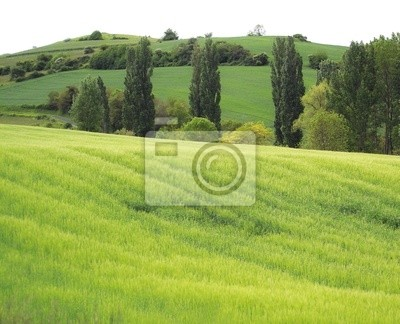landscape of printenps