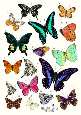 Sticker Large Collection of Butterflies, hand drawn set isolated.Vector illustration