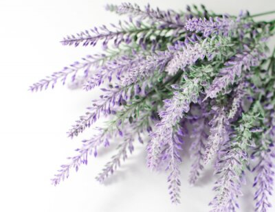 Sticker Lavender branch