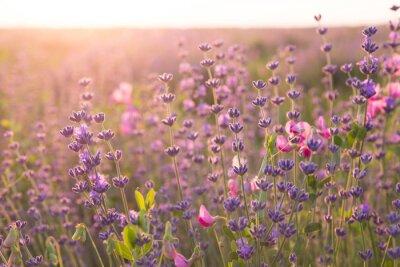 Sticker Lavender field.