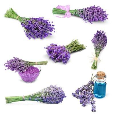 Sticker Lavender, Flower, Lavender Coloured.