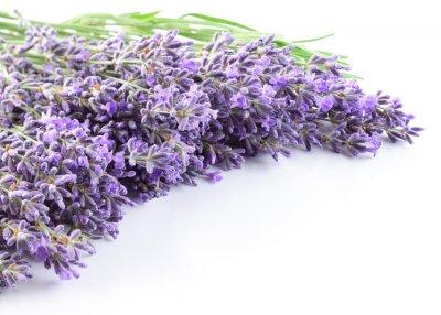 Sticker Lavender flowers background.