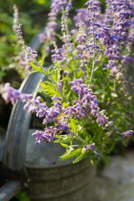 Sticker Lavender Flowers in Garden Watering Can