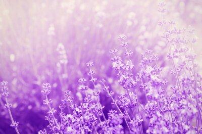 Sticker Lavender Mood