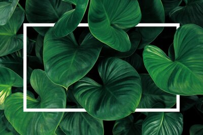 Sticker Leaf pattern nature frame layout of heart shaped green leaves Homalomena tropical foliage plant on dark background with white frame border.