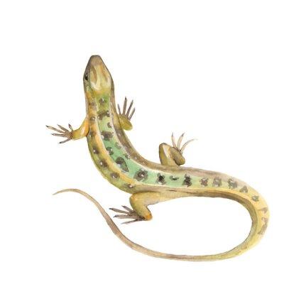 Sticker Lizard. Watercolor illustration in vector