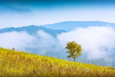Lonely mapple tree on a hill