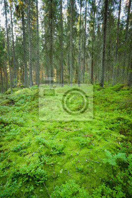 Sticker Lush forest floor in finland