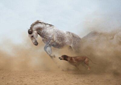 Sticker  Lusitanian horse