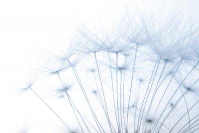 Sticker macro of an overblown fluffy dandelion