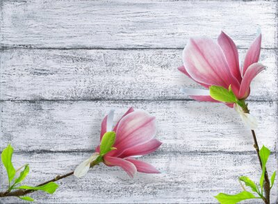 Sticker Magnolia flowers on background of shabby wooden planks