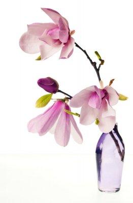 Sticker Magnolia Jane Blossoms