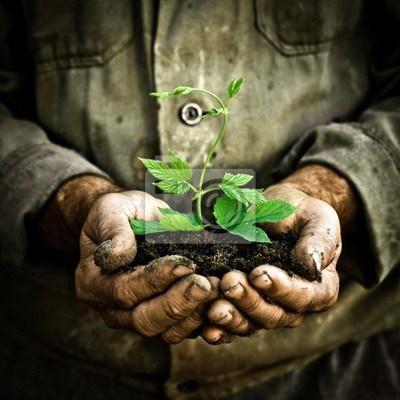 Sticker Man hands holding a green young plant