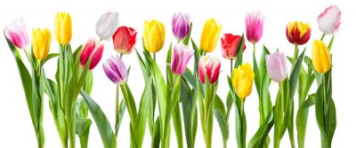 Sticker Many different tulip flowers isolated