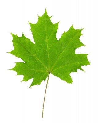 Sticker Maple leaf