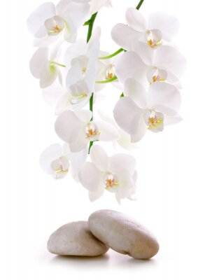Sticker Massage Stones with Orchid.