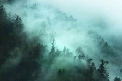 Sticker misty forest landscape in the mountains