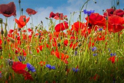 Sticker Mohnblumen - The Poppy Field