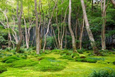 Sticker Moss garden view in Arashiyama, Kyoto