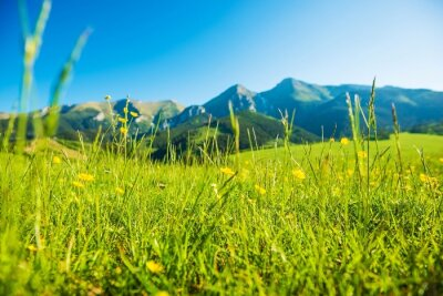 Sticker Mountains Summer Meadow
