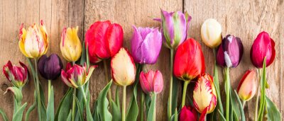 Sticker multicolored tulips on a wooden background, banner, old boards, spring flowers, tulips on the boards