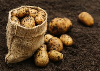 Sticker Newly harvested potatoes