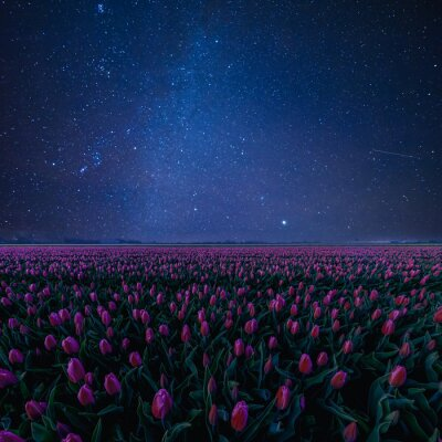 Sticker Night Landscape with Tulips and Stars