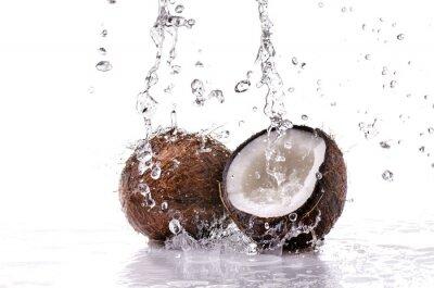 Sticker noce di cocco splash
